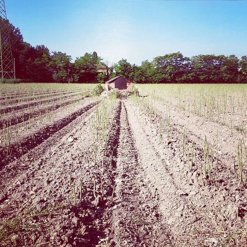 Tree Rural Scene Agriculture Field Vegetable Crop  Sky Landscape Cultivated Land Agricultural Field