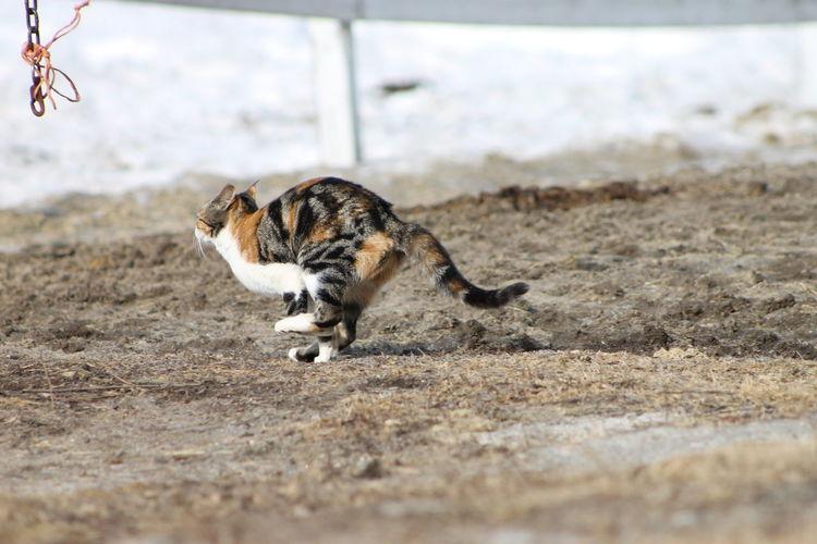 Cat running on field