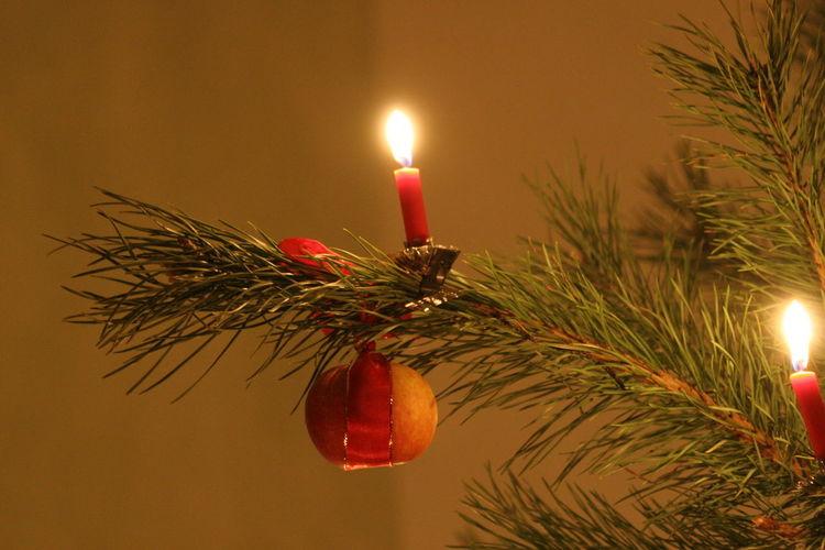 Advent Burning Candle Celebration Christmas Christmas Decoration Christmas Tree Close-up Flame Glowing Illuminated Indoors  Lighting Equipment No People Plant Red Apple