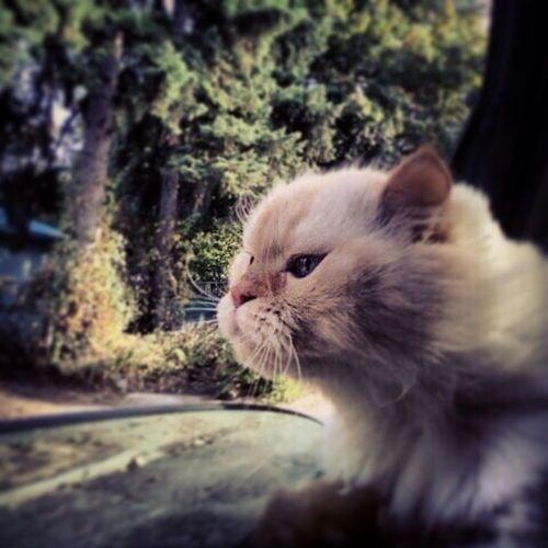 Show Me Your Pets Cat Lovers Cats Of EyeEm Eyem Cute Cats