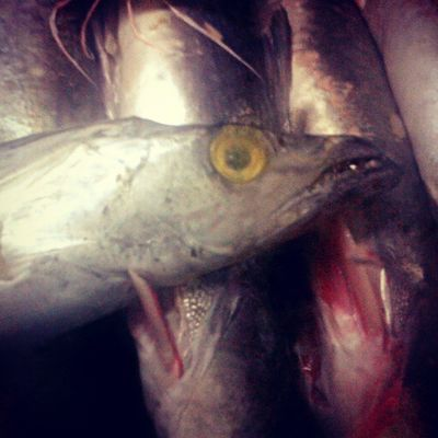Igers Fish Samsungphotographer