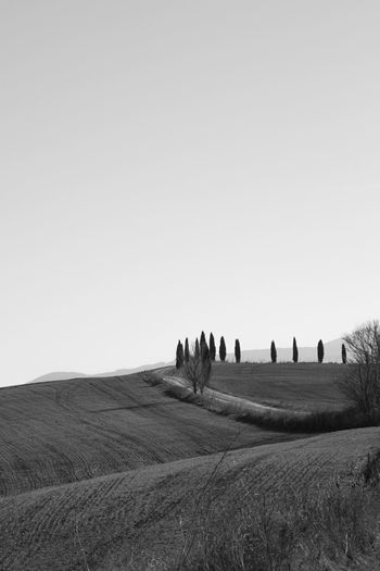 Sky Landscape Land Environment Field Nature Scenics - Nature Tranquil Scene Outdoors Copy Space Clear Sky Tranquility Beauty In Nature Plant Day Rural Scene Non-urban Scene Grass Agriculture Real People Crete Senesi Pienza Val D'orcia Tuscany Tuscany Hills Tuscany Countryside Cypresses Road