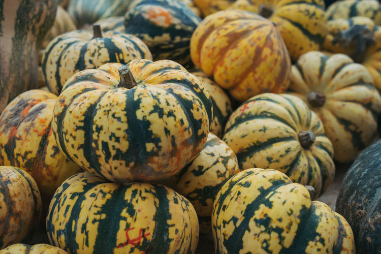 Colourful pumpkin for sale at a farmers market.