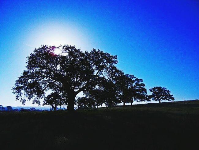 Tree Blue In Clear Skies