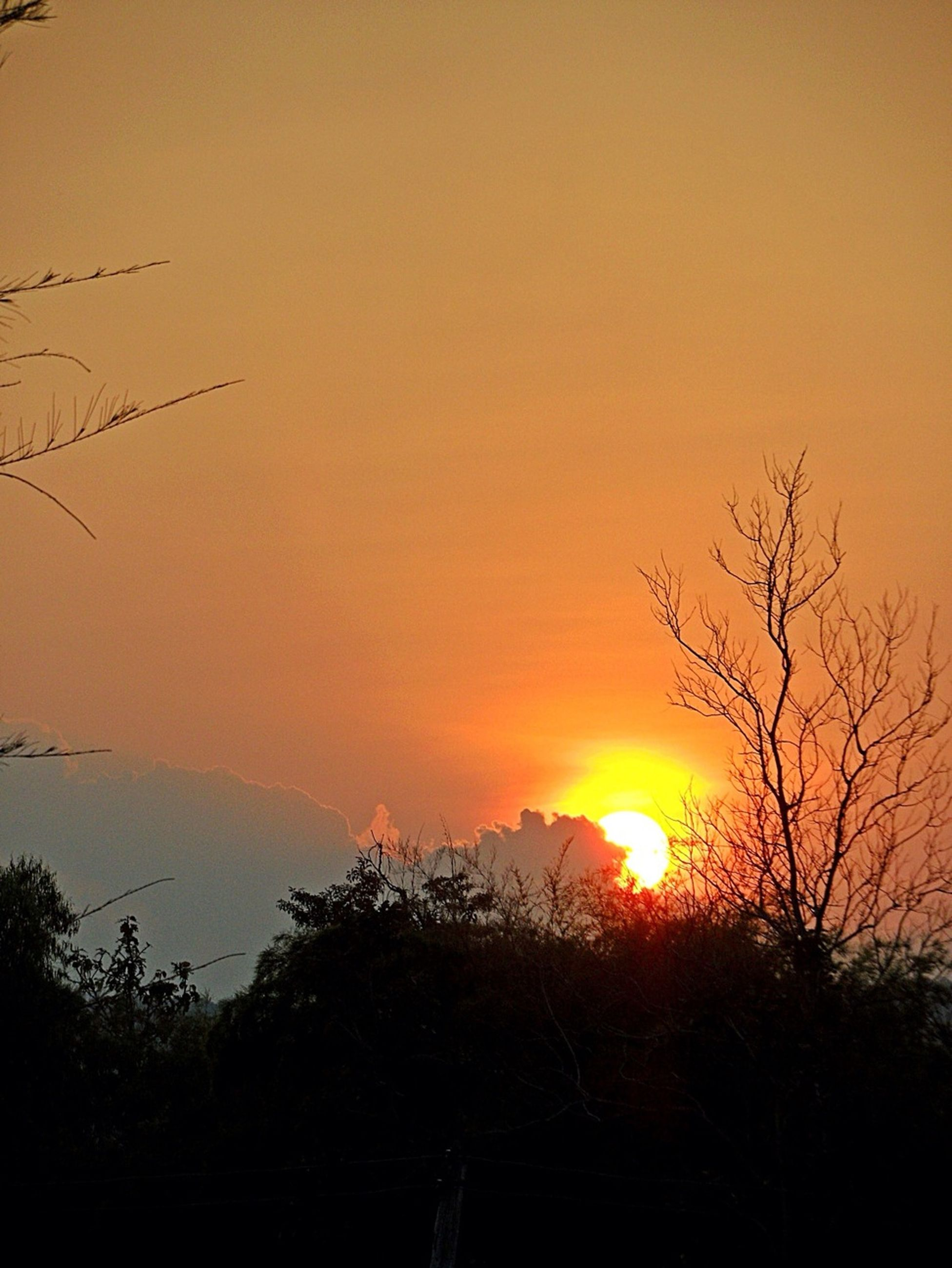 sunset, orange color, silhouette, sun, scenics, beauty in nature, tranquility, tree, tranquil scene, nature, idyllic, sky, clear sky, copy space, outdoors, sunlight, no people, branch, growth, majestic