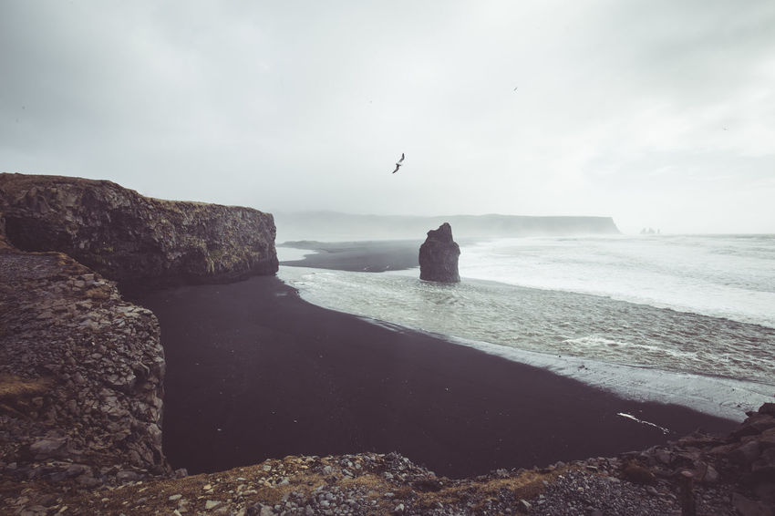 Days of travel: 7 Dyrhólaey Cliff, the southernmost point in Iceland. Atmosphere Iceland Animal Animal Themes Animal Wildlife Animals In The Wild Beach Beauty In Nature Bird Flying Horizon Over Water Iceland_collection Land Nature No People One Animal Outdoors Rock Rock - Object Scenics - Nature Sea Sky Solid Travel Destinations Water The Great Outdoors - 2018 EyeEm Awards