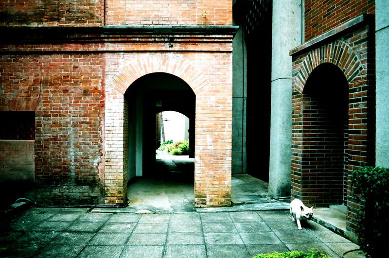 Playing With The Animals Frenchbulldog Pets Corner Historic Building Hestoricall Building Discover Your City Architecture Urban 4 Filter Looking To The Other Side Nikon Fm10
