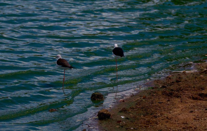 waterfowl. Sri Lanka. 3629466