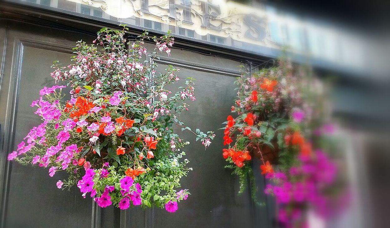 Summer Flowers Hanging Baskets London 2014