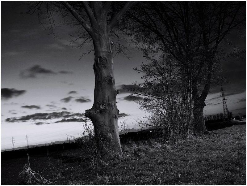 Taking Photos Nightphotography Blackandwhite Belgium. Belgique. Belgie. Belgien. Etc. Trees Nature Sky And Clouds Sky Crepuscular Light Crepuscular End Of The Day Crépuscule Arbre Noir Et Blanc Fin De Journée