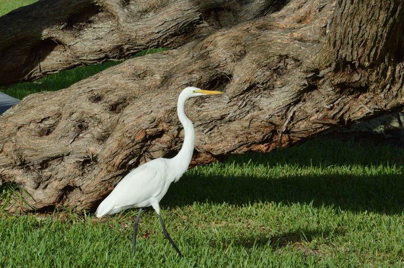 Crane by tree on field