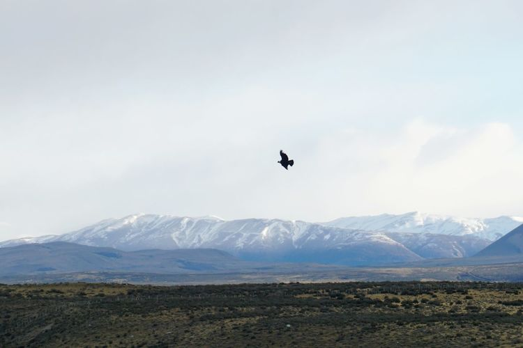 Bird flying over mountains against sky