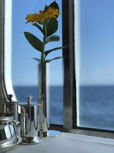 Close-up of flower vase on table by sea