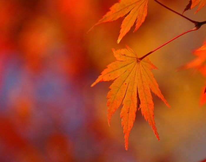 Autumn Leaves Autumn Colors Nature_collection EyeEm Nature Lover