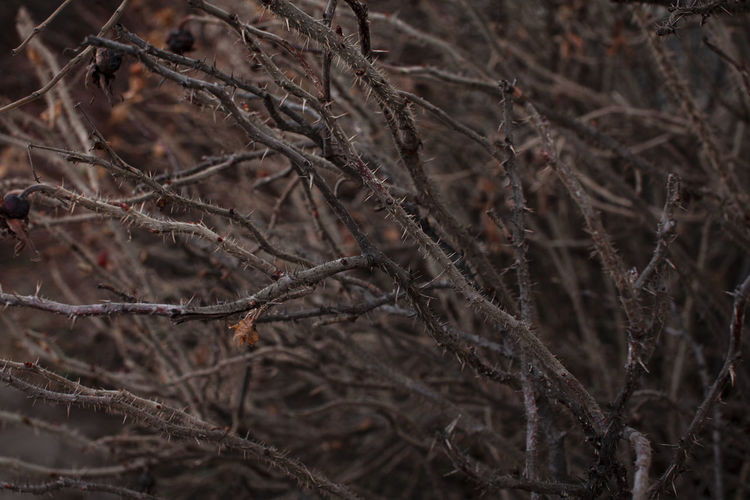 Close-up of dried plant in forest