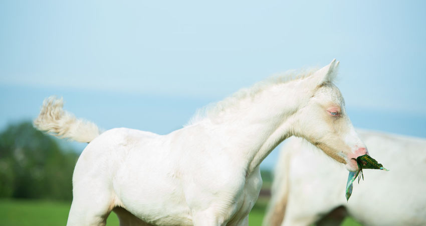 Animal Themes Close-up Day Domestic Animals Horse Nature No People Outdoors Sky