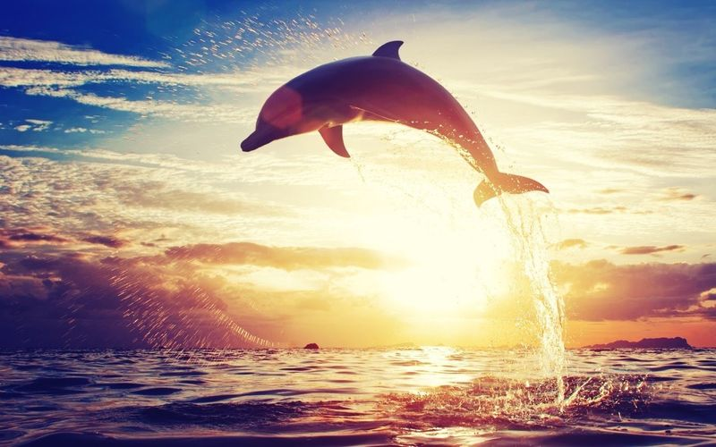Delfines Sunset