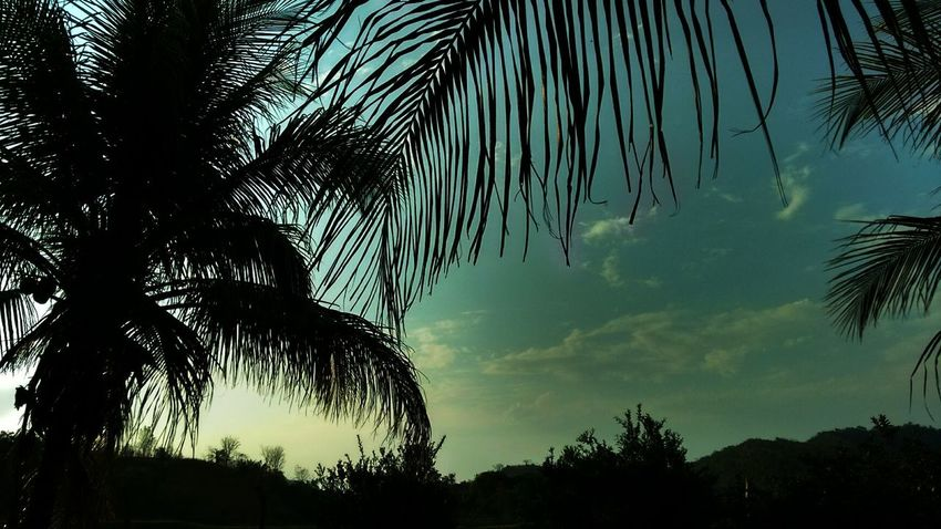 Beauty In Nature Day Growth Low Angle View Nature No People Outdoors Palm Tree Scenics Silhouette Sky Tranquility Tree