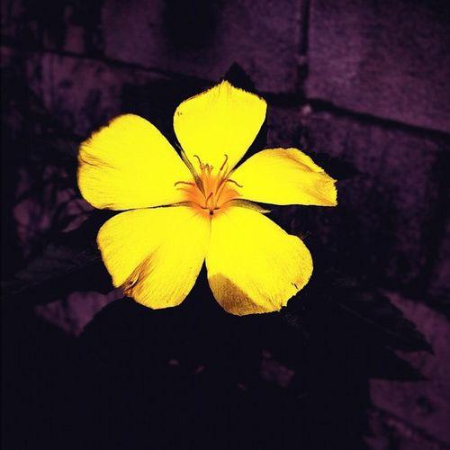 Igth Popmeth Flower Iphonegraphy
