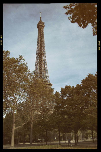 Paris Tower Architecture Tree Tall - High Built Structure Travel Destinations History The Past Transfer Print Sky Tourism Low Angle View Plant Travel Auto Post Production Filter City Nature Metal Architectural Feature No People Outdoors Iron - Metal Spire  Paris Eiffel Tower Eiffelturm