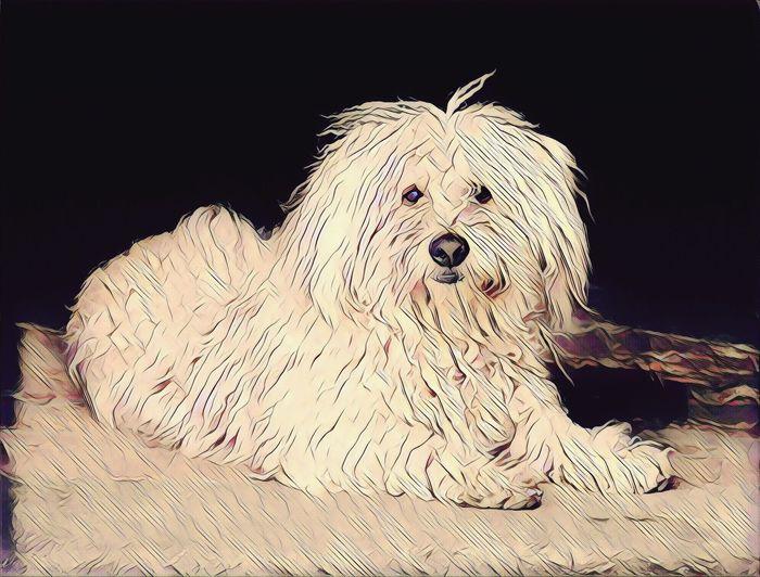 Dog Art One Animal