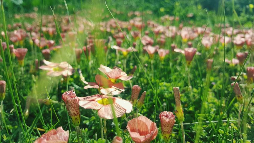 Spring has arrived Growth Nature Field No People Plant Outdoors Beauty In Nature Flower Freshness Flower Head Green Color