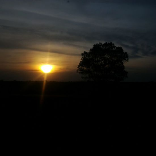 Sunset Silhouette Sun Tree Beauty In Nature Nature Dark Sky Outdoors Landscape Photography Themes Wonderful Indonesia Palembang-Indonesia Indonesian Photographers Collection Obelixphotohraphy