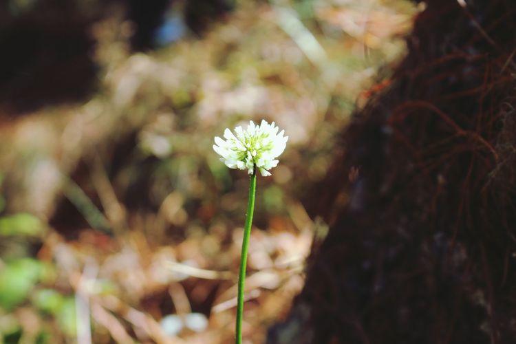 Flower to God