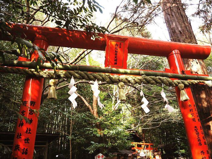 New Year Around The World Happy New Year Beautiful Day Morning Light The Bigining Shrine Hope Luck Kyoto,japan Love Have A Good Day Start Bridge
