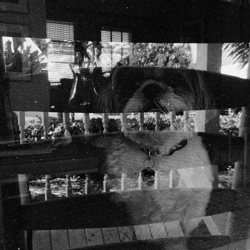 Shootermag Dog I Love My Dog EyeEm Best Shots OpenEdit Black And White Pets Bestfriend Eye4black&white  Blackandwhite