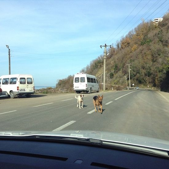 Ordu ünye arasi yoldayiz hedef Yaliköy o siralar. Köpek saldirisi o an dog road trip