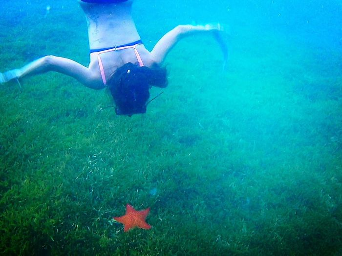 Underwater Swimming UnderSea Nature Sea Life Beauty In Nature Sea Star Diving Gifts Of The Nature