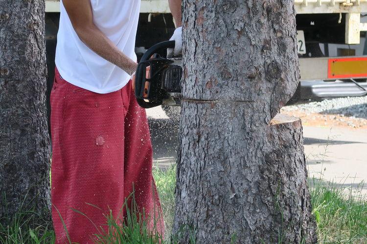 Man working on tree trunk