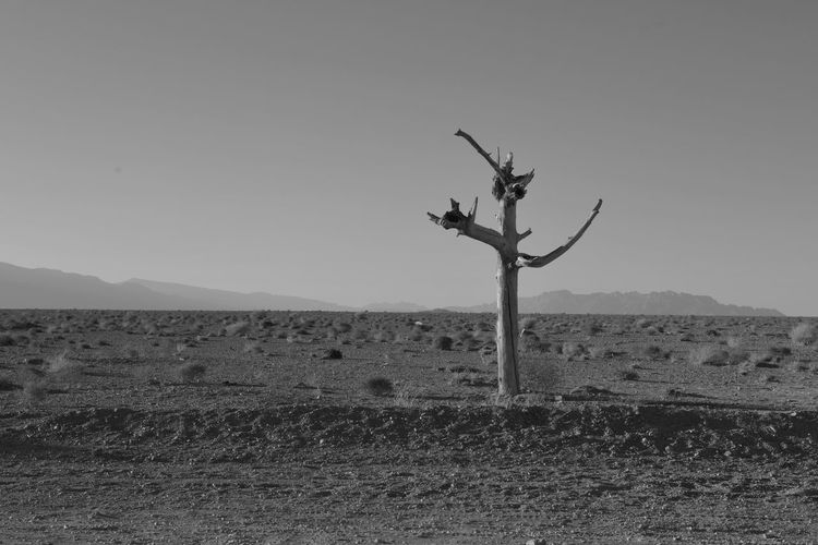 Baum Baum Ohne