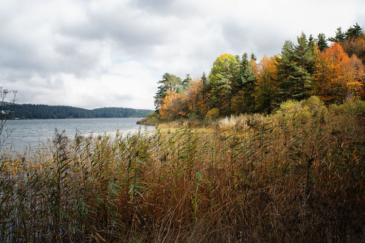 Plants by lake against sky during autumn