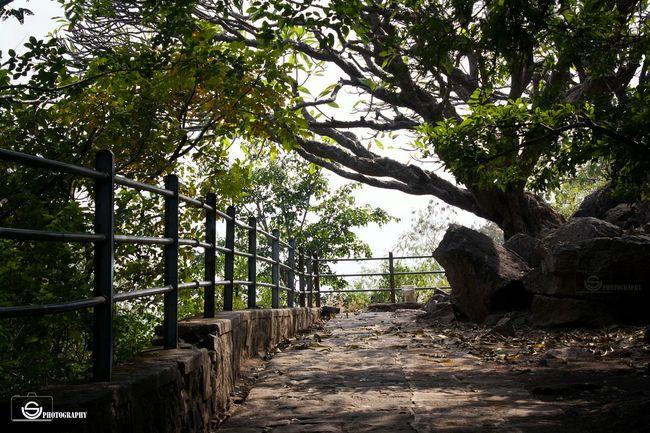 TreePorn Treeloverforever Afternoon Shadows & Lights Relaxing Moments Adventures Pandavleni Nashik Maharashtra India