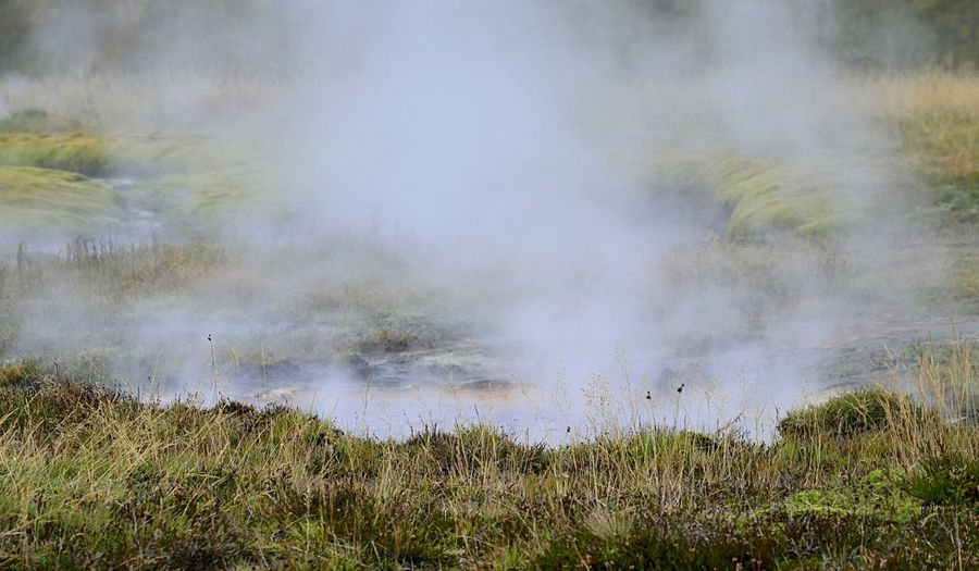 Steam from a geyser in Iceland EyeEm Nature Lover Iceland Beauty In Nature Day Environment Geology Geyser Grass Hot Spring Land Landscape Nature No People Non-urban Scene Outdoors Pjpink Power In Nature Scenics - Nature Steam