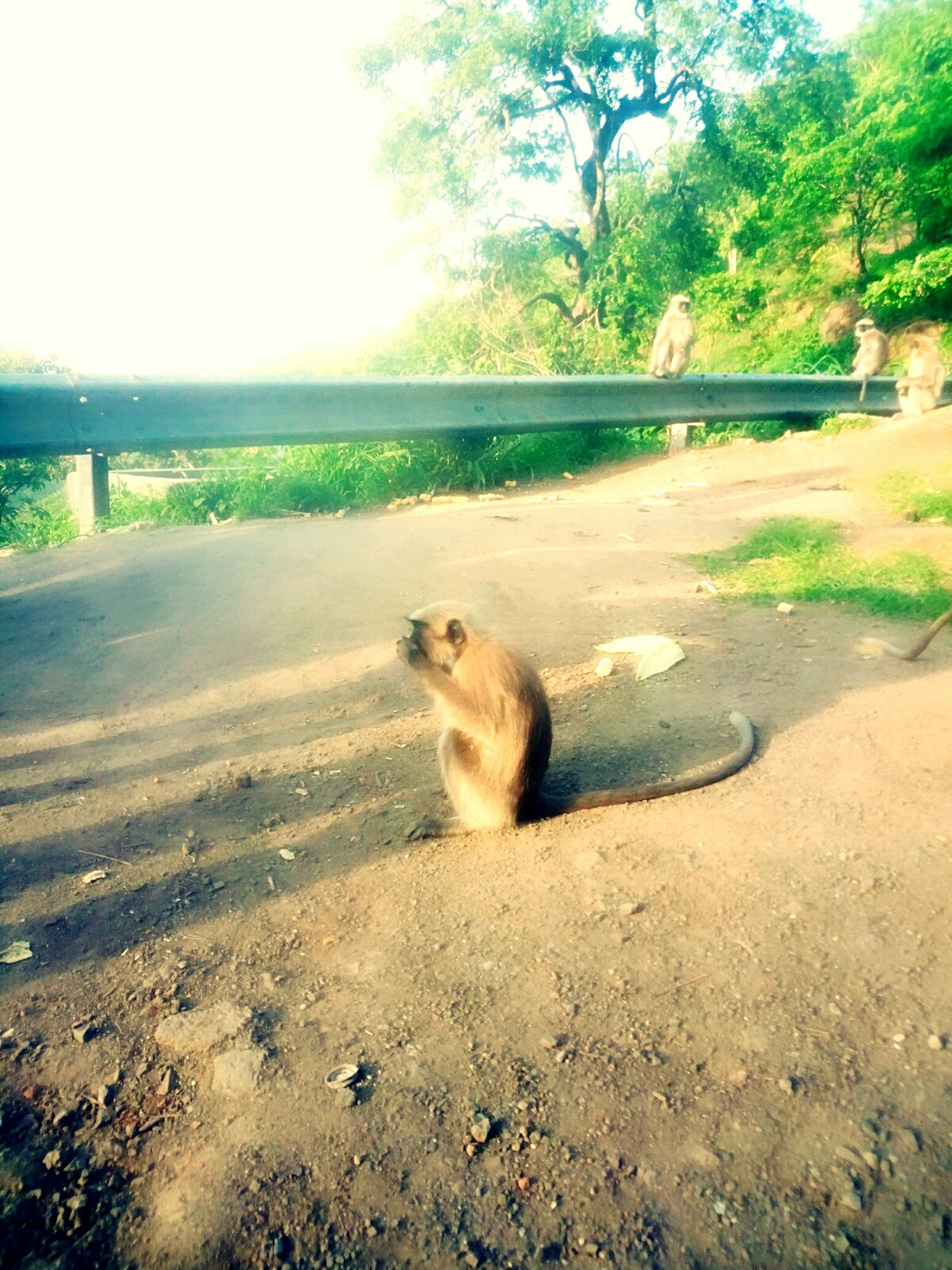 animal themes, one animal, mammal, day, nature, domestic animals, outdoors, sitting, pets, no people, water, tree, sky