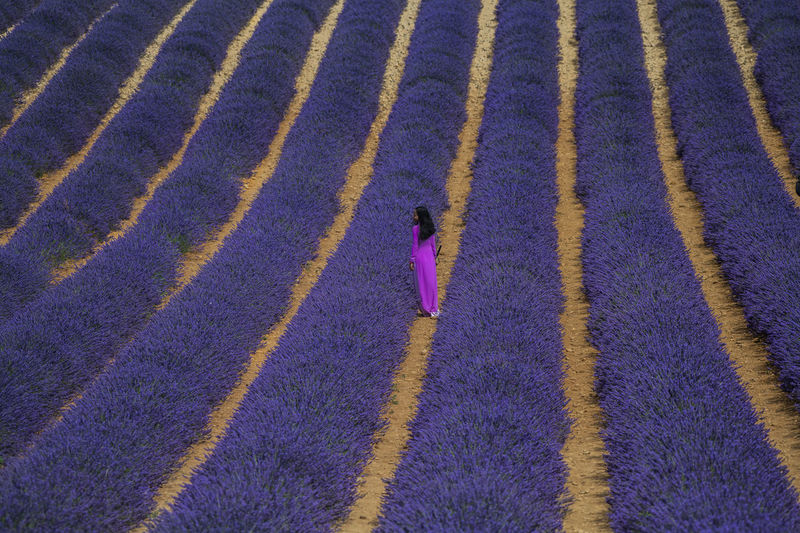 High Angle View Of Woman Standing Amidst Flowering Plants On Field