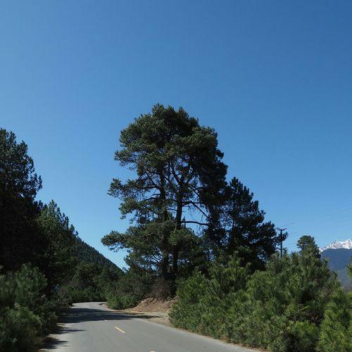 Tree On The Road Landscape 在路上 风景 树