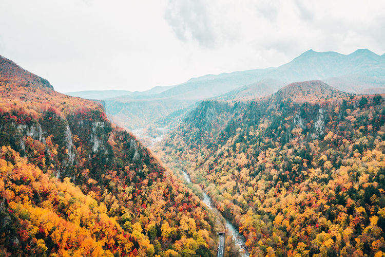 Daisetsuzan Mountain Beauty In Nature Scenics - Nature Sky Tranquil Scene Tranquility Plant Tree Autumn Nature Day Mountain Range Environment Landscape Cloud - Sky No People Non-urban Scene Change Idyllic Growth Outdoors Autumn Collection Mountain Peak