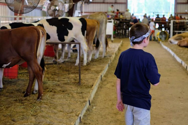 Rear view of boy standing at animal pen