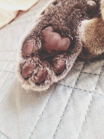 Her Paw looks like a Teddy Bear I love this Cat