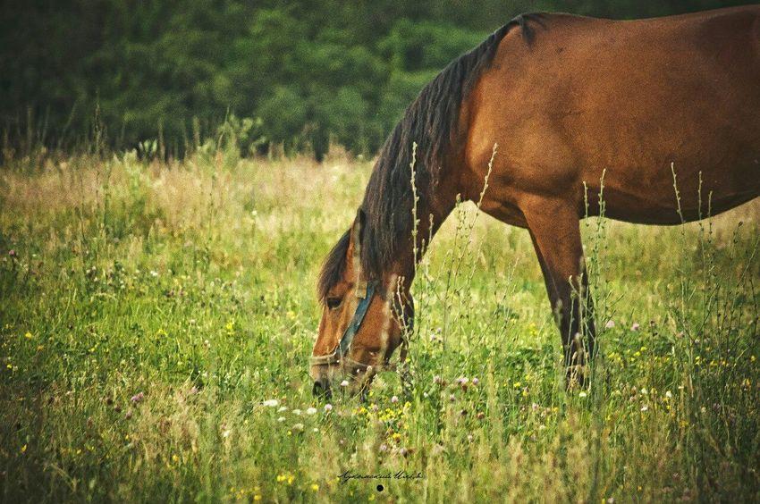 Pets Corner Zhlobin Horse Grass Green Animals