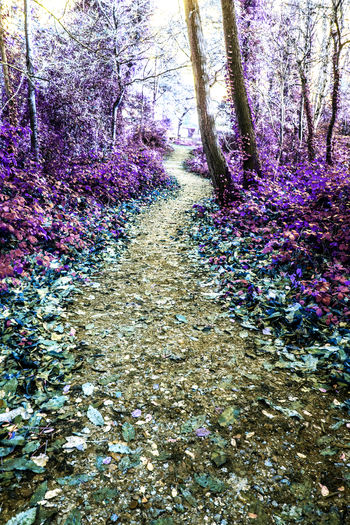 View of purple flowering plants in forest