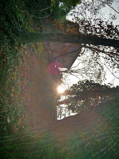 At Home, Winter, Sun First Eyeem Photo