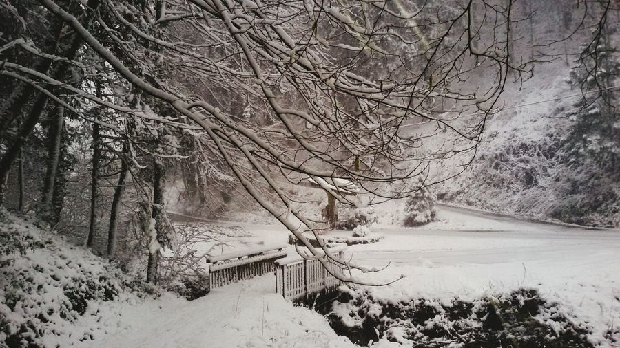 Winter Wunderland ...