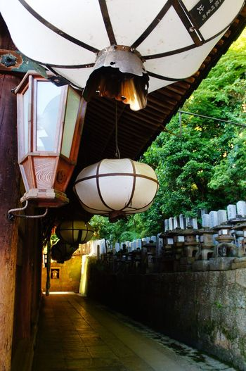Built Structure Architecture Low Angle View Day Lantern Building Exterior No People Tree Outdoors Passage Nigatsudo