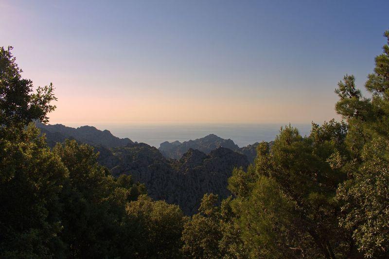 Serra De Tramuntana Mallorca Tree Plant Sky Beauty In Nature Scenics - Nature Tranquility Growth Tranquil Scene Nature No People Mountain Sunset Non-urban Scene Idyllic Outdoors Sunlight Green Color
