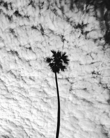 Stem Growth Low Angle View Silhouette Sky Nature Plant Flower Single Flower Beauty In Nature Day Outdoors Flower Head Outline No People Growing Fragility Freshness